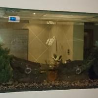Built-in 2m Aquarium (Fish Tank) for sale