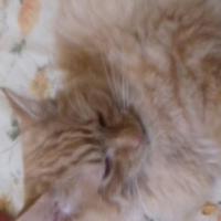 Missing Ginger Male