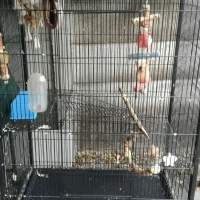 Large cage - can be used for rats/birds or other critters