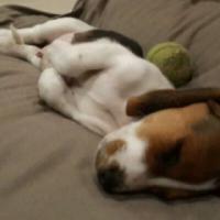 Peace of Mind Pet Care