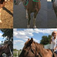 Bombproof Children's Horse