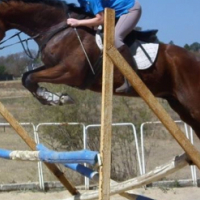 Ideal polo cross or western games horse