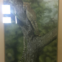 Cheetah in a tree picture