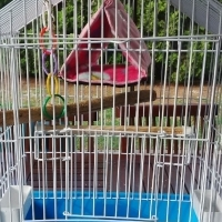 BIRD CAGE WITH TENT
