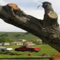 Fully Insured Tree Felling and Stump Removal