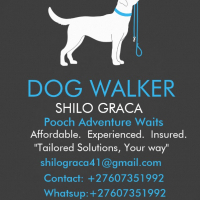 Shilo Doggy Walks ''Tailored Solutions, Your Way''