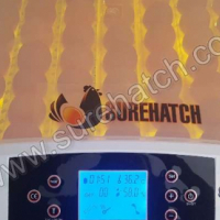 Surehatch ChickView 56 Egg Incubator