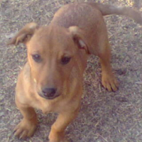 Small mix breed puppies