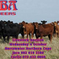 Livestock Auction 4 October