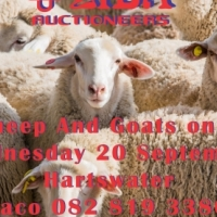 1000 goats and sheep on auction Wednesday 20 September
