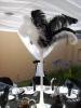 Ostrich Feather Centrepieces
