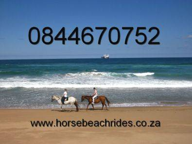 Romantic Picnic & Horse Beach Ride