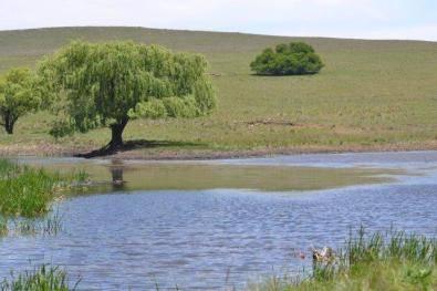 Cattle, sheep production farm for sale, Memel,