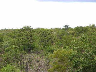 21 Ha - Vacant land in Private Game Reserve