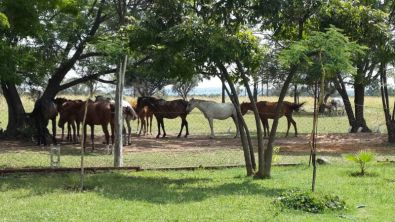Kromdraai 115JR Smallholding For Sale