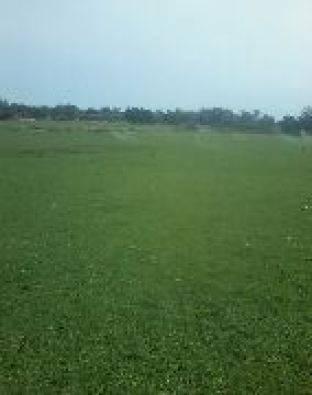 Instant Row on lown grass kukuyu r