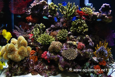 Marine Equiptment and Aquariums for sale