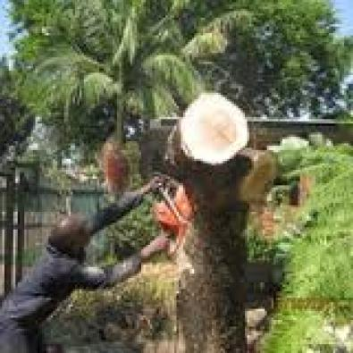 Tree felling vaal 078 217 0278