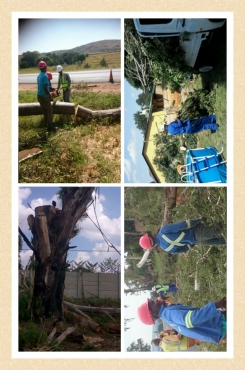 Tree felling in Vaal, tree cutting in Alberton, 0782170278