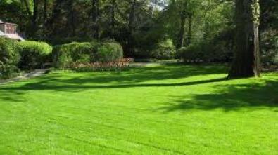 FRESH INSTANT LAWN, KIKUYU ,GOLF GREEN AND LM GRAS
