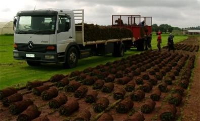 ECO TURF INSTANT GRASS ,TREE FELLING & TOPSOIL