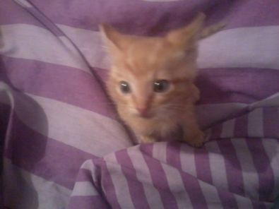 KITTENS FOR SALE R 100 | Junk Mail