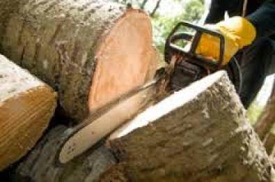 boom sny:Tree cutting,and stump removal
