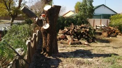 K20 Tree Felling