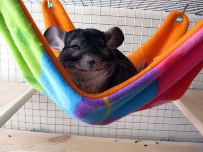 Snuggly pet cage accessories