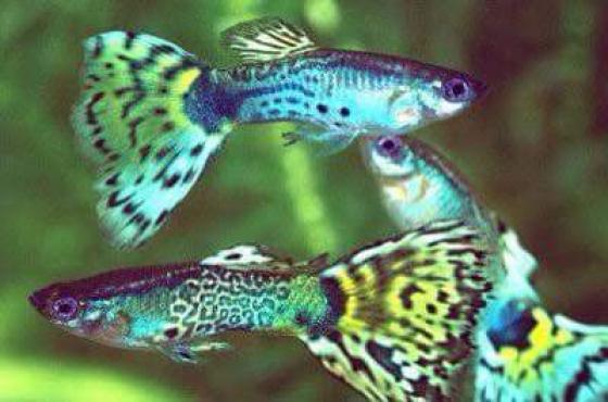 tropiese visse en waterplante