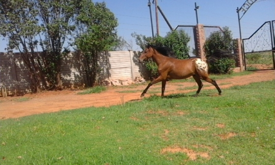 2 super horses for sale.