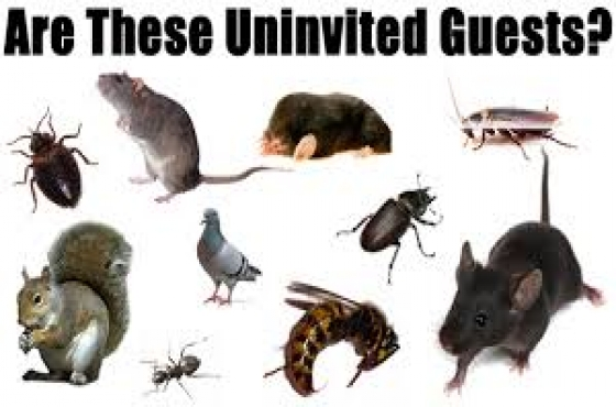 Strong and Mighty Pest Control  & Cleaning Services