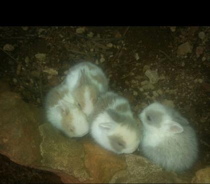 hasies  bunnies