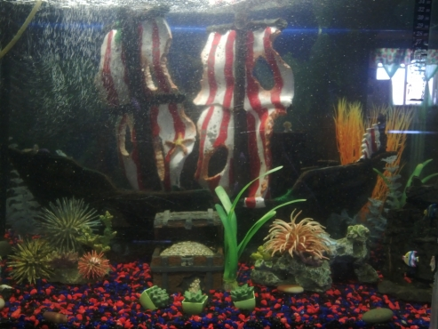 fish tank and accessories for sale