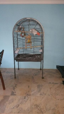 six month old parrot cage for sale