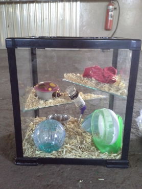 Hamster glass cage with food and accesories