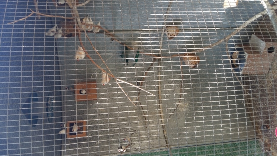 Huge cage with birds