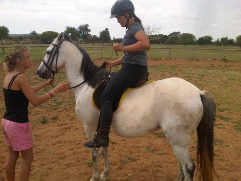 Urgent Sale Welsh Pony Mare