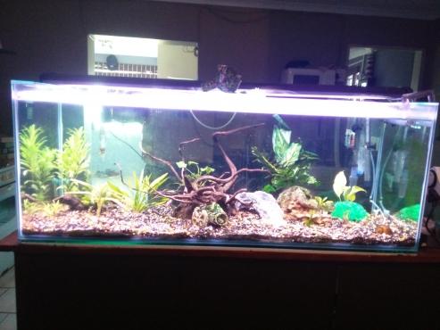 Full aquarium setup