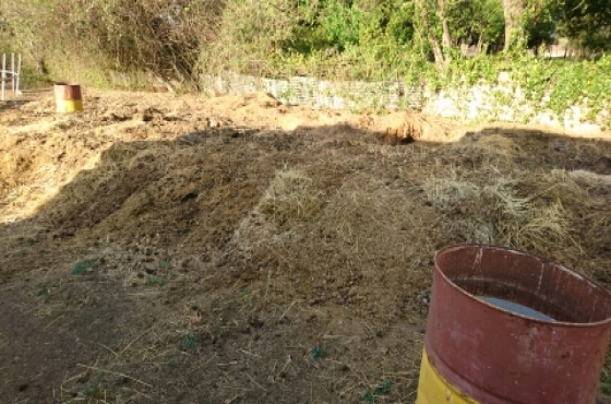 free horse manure as compost.