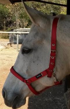 HorseHalters(HeadCollars)