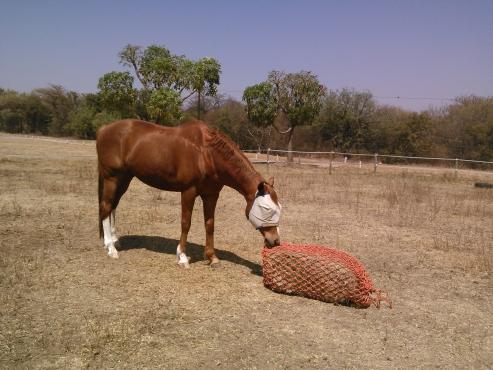 Bargain- slow  feeder haynets  for horses