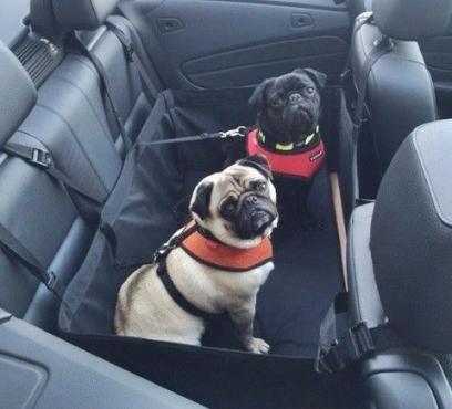 Shop Playpens | Voyager Dog Car Seat