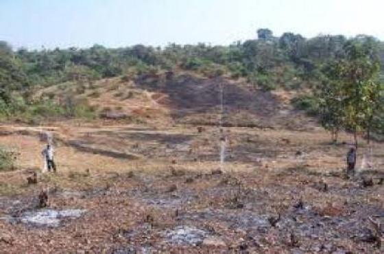 Randburg Tree Felling & Landscaping