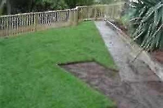 Grassfarm Instant Lawn