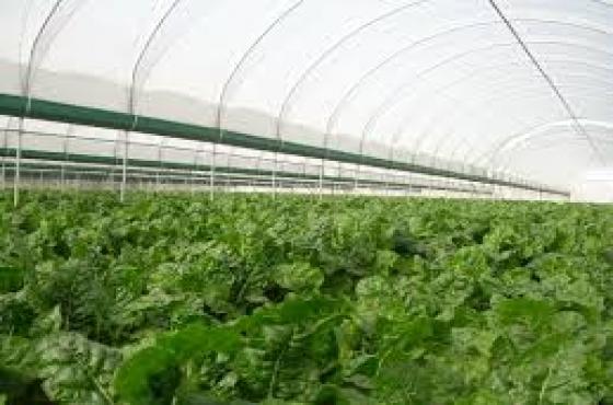 Mahikeng Greenhouses Installation