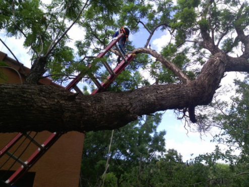 Precision Cutting,Prunning,Trimming 0607521660 Vaal Tree Fellers