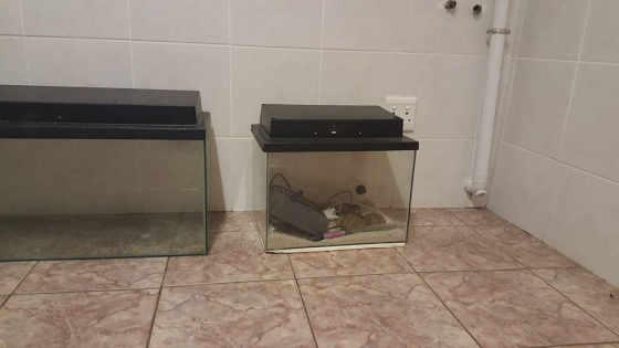 Tanks for sale