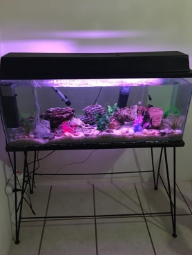 3ft tank with stand and all accessories