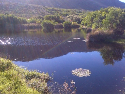 27 Acres of Beautiful Farmland and House in Cape Point - ONCE IN A LIFETIME BARGAIN!